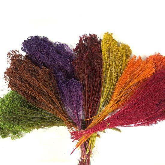 Obrázek z Broom bloom barevný (svazek)