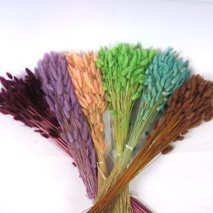 Obrázek Lagurus barevný (svazek)