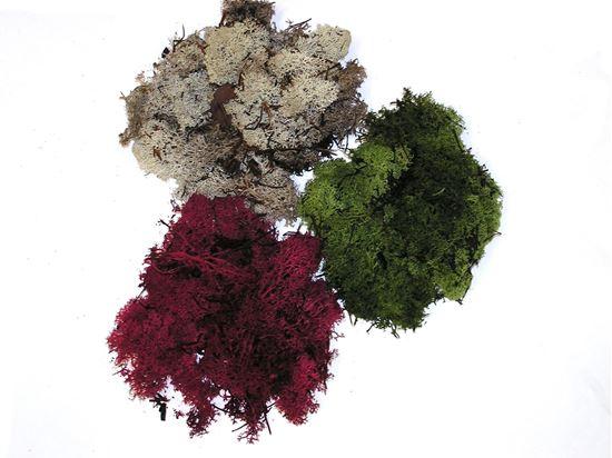 Obrázek z Muschio nordico - mech - balení 0,5 kg