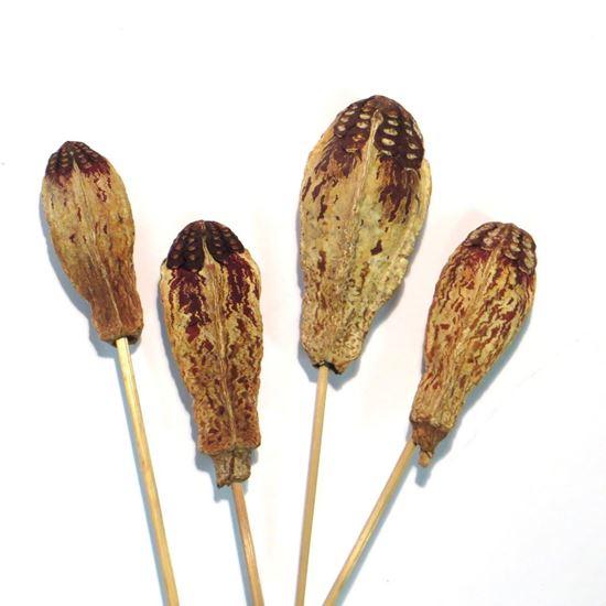 Obrázek z Mehogany - přírodní, na stonku (15ks)