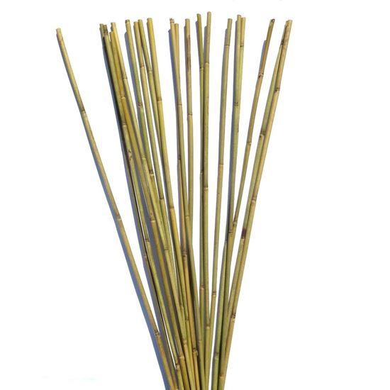 Obrázek z Tyč bambusová 120 cm, 10-12 mm