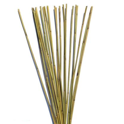 Obrázek Tyč bambusová 210 cm, 14-16 mm