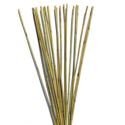 Obrázek Tyč bambusová 300 cm, 30-35 mm
