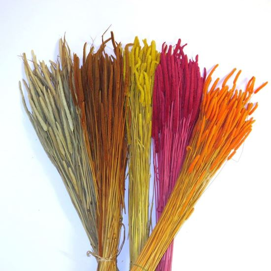 Obrázok z Phleum code - prírodné, farebné (zväzok)