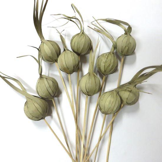 Obrázok z Khej onion (Eliot) - prírodný, na stonke (10ks)