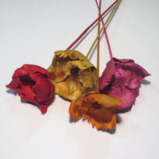 Picture of Palm cap - barevný, na stonku (10ks)