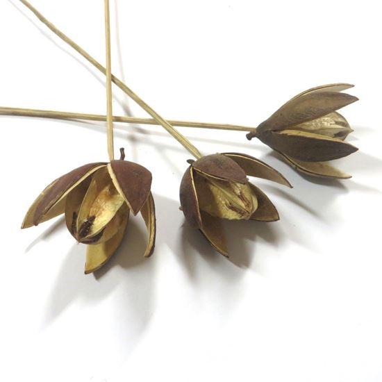 Obrázok z Wild lily - prírodná, na stonke (15ks)