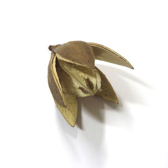 Obrázek z Wild lily - přírodní (20ks)