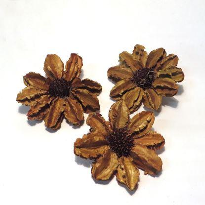Obrázok z Arjun sunflower - prírodná (25ks)
