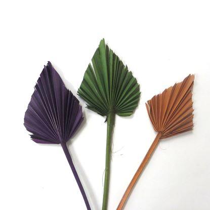 Obrázek Palm spear - barevný (10ks)