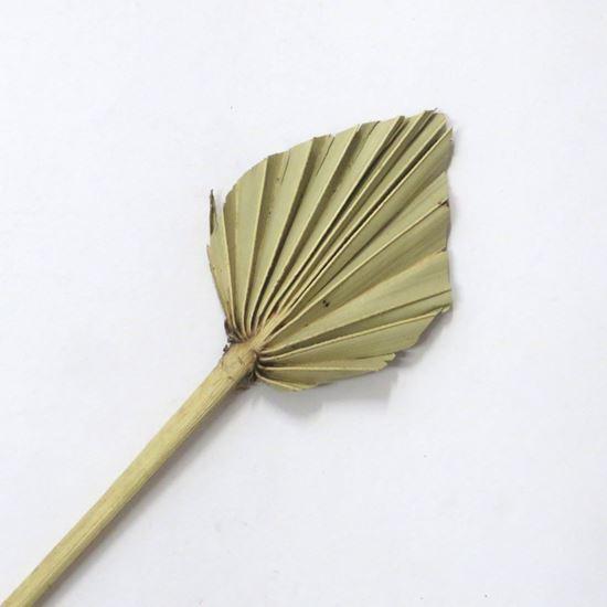 Obrázek z Palm spear small - přírodní (10ks)