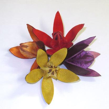 Picture of Wild lily - barevná (20ks)