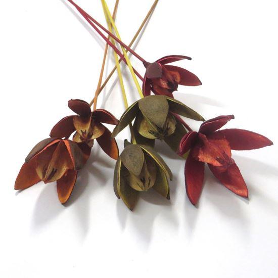 Obrázek z Wild lily - barevná, na stonku (15ks)