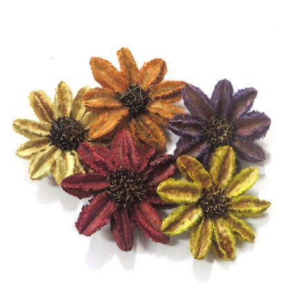 Obrázok z Arjun sunflower - farebná (25ks)
