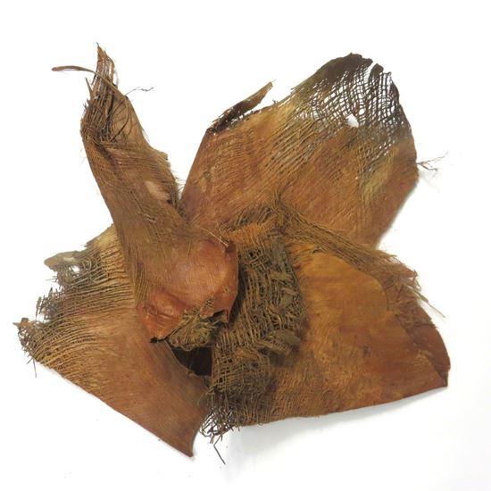 Obrázok z Palm fibre - prírodná (0,5kg)