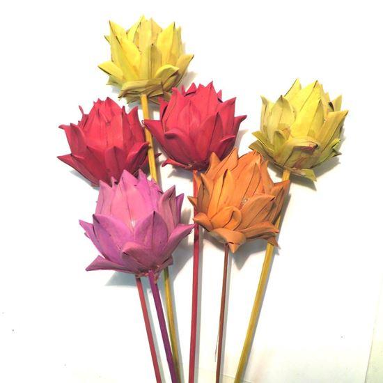 Obrázek z Artichoke khejur - barevný, na stonku (10ks)