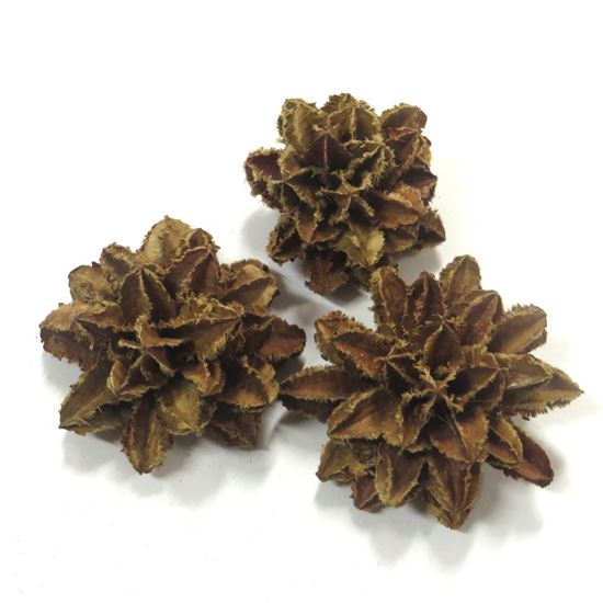 Picture of Arjun flower - přírodní (40ks)