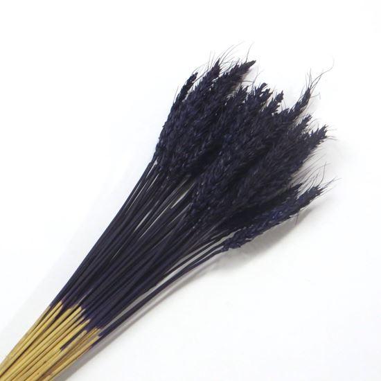 Obrázek z Sušina fialová - svazek